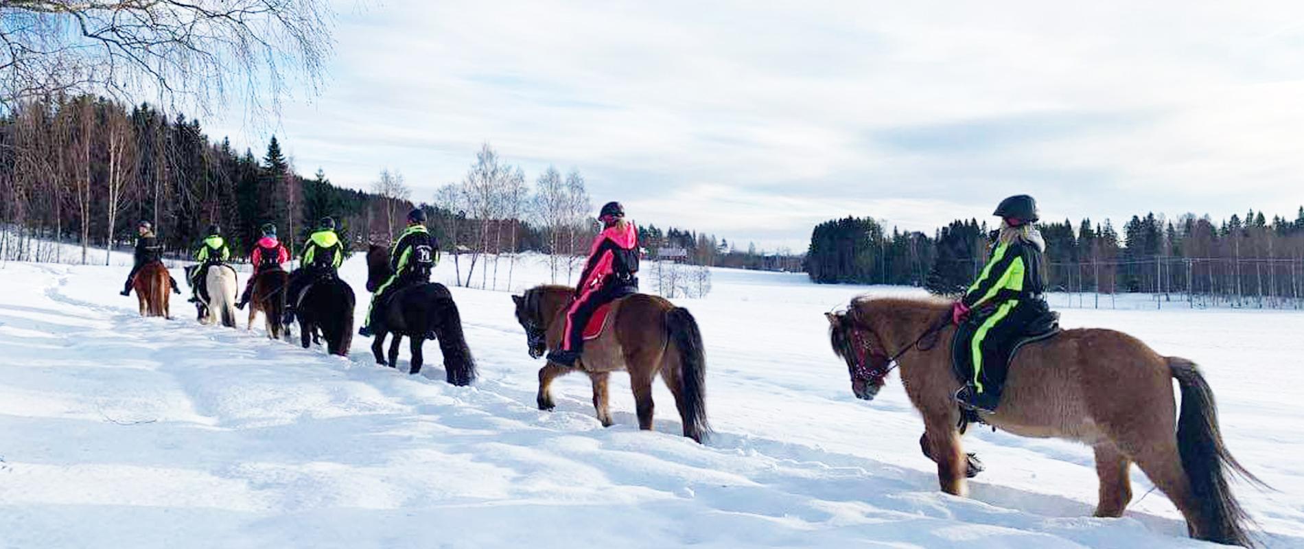Stalldag med isländshästar
